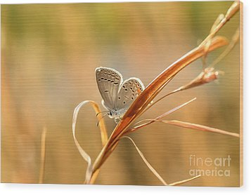 Soft Baby Blue Wood Print by Debbie Green
