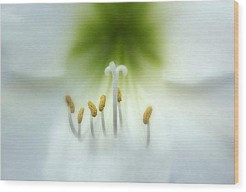 Soft Beauty Wood Print by Lynn Sprowl