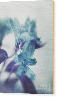 Soft Blues Wood Print by Priska Wettstein