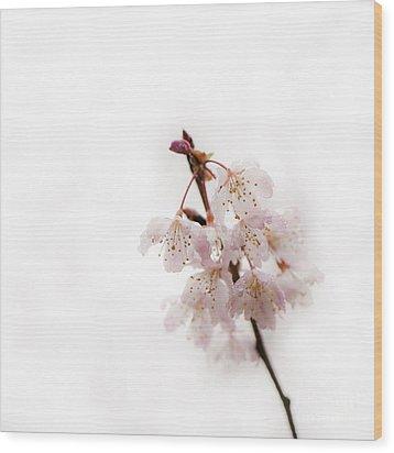 Soft Cherry Plum Wood Print by Anne Gilbert