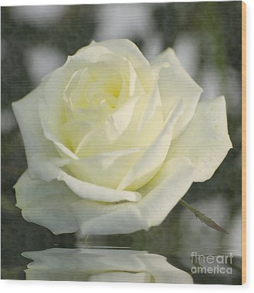 Soft Cream Rose Wood Print by Brian Roscorla