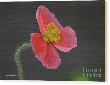 Soft Wood Print by Debby Pueschel