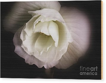 Soft Flower In Black And White Wood Print by John S