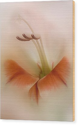Soft Gladiolus Wood Print by Brian Roscorla