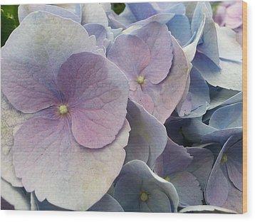 Soft Hydrangea  Wood Print