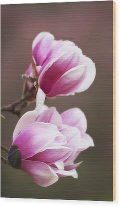 Soft Magnolia Blossoms Wood Print