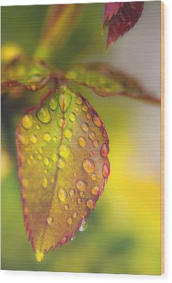 Soft Morning Rain Wood Print by Stephen Anderson