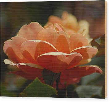 Wood Print featuring the photograph Soft Orange Flower by Matt Harang