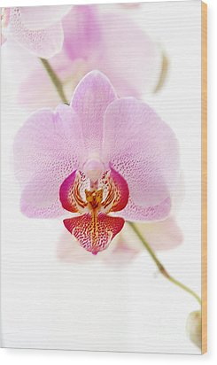 Soft Orchid Wood Print by Hannes Cmarits