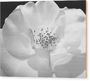Soft Petal Rose In Black And White Wood Print by Jennie Marie Schell