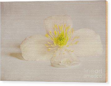 Soft Pink Flower Wood Print by Svetlana Sewell