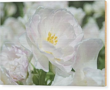 Wood Print featuring the photograph White Flower Is Beautiful by Haleh Mahbod