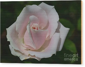 Wood Print featuring the photograph Soft Pink Rose by Jeannie Rhode