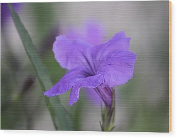 Wood Print featuring the photograph Soft Purple Floral by Penny Meyers