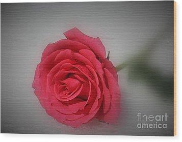 Soft Red Rose Wood Print by Yumi Johnson