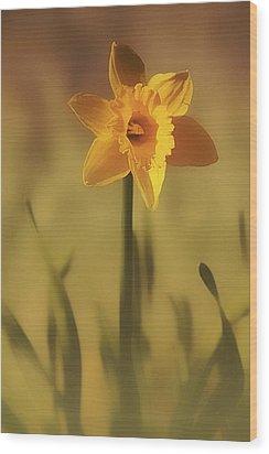 Soft Spring Daffodil Wood Print by Anne Macdonald