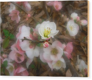 Soft Spring Quince Blossoms Wood Print by MM Anderson