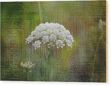 Soft Summer Rain And Queen Annes Lace Wood Print by Suzanne Powers