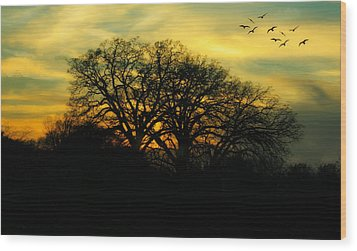 Soft Sunset Wood Print by Joan Bertucci