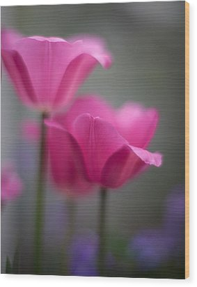 Soft Tulip Twilight Wood Print by Mike Reid