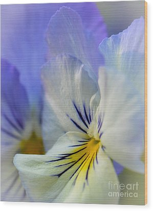 Soft White Pansy Wood Print by Amy Porter
