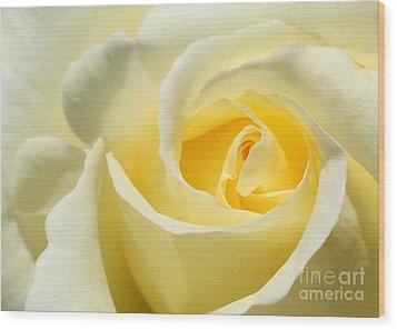 Soft Yellow Rose Wood Print by Sabrina L Ryan