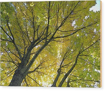 Soft Yellow Wood Print