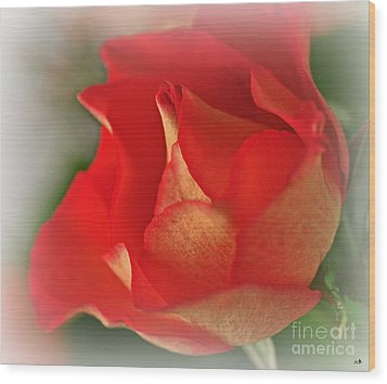 Soften Rose Wood Print