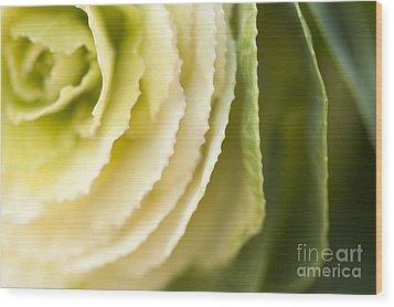 Softly Green Wood Print by Anne Gilbert