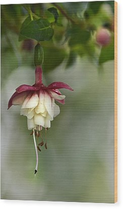 Softly Hanging Wood Print