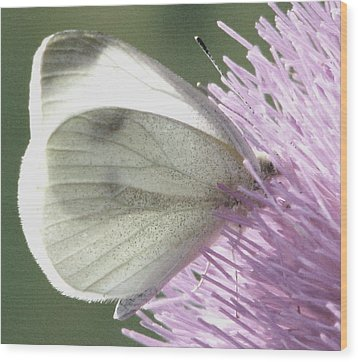 Softly Into Summer Wood Print by Angela Davies
