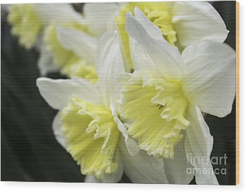Softly Spring Wood Print by Arlene Carmel