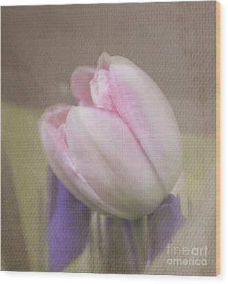 Softly Tulip Wood Print by Arlene Carmel