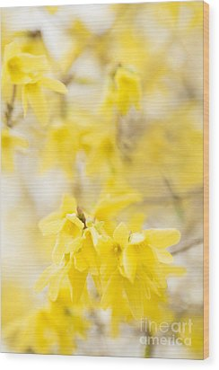 Softly Yellow Wood Print by Anne Gilbert