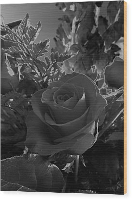 Wood Print featuring the photograph Solarized Rose by Scott Kingery