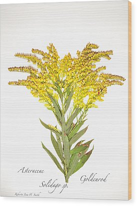 Solidago 2 Wood Print