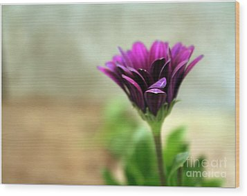 Wood Print featuring the photograph Solitaire by Chris Anderson