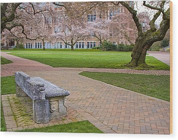 Wood Print featuring the photograph Solitary Bench by Sonya Lang