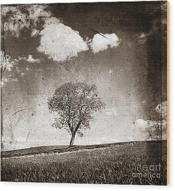 Solitary Tree In Limagne Landscape. Auvergne. France Wood Print by Bernard Jaubert