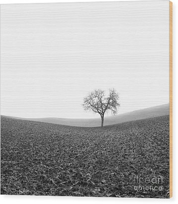 Solitary Tree In Winter. Auvergne. France Wood Print by Bernard Jaubert