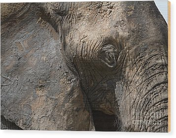 Wood Print featuring the photograph Some Elephants Prefer Mud by Chris Scroggins