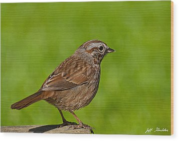 Song Sparrow On A Log Wood Print by Jeff Goulden