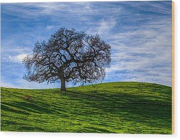 Sonoma Tree Wood Print by Chris Austin