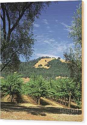 Sonoma Valley Vineyard Wood Print by Craig Lovell