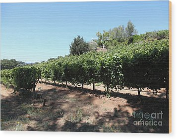 Sonoma Vineyards In The Sonoma California Wine Country 5d24499 Wood Print by Wingsdomain Art and Photography