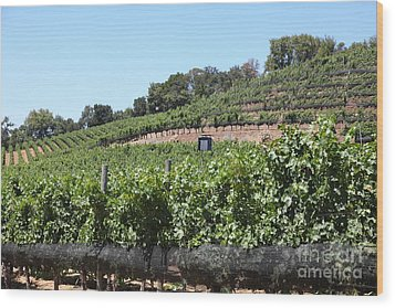 Sonoma Vineyards In The Sonoma California Wine Country 5d24503 Wood Print by Wingsdomain Art and Photography