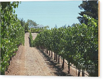 Sonoma Vineyards In The Sonoma California Wine Country 5d24507 Wood Print by Wingsdomain Art and Photography