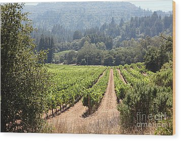 Sonoma Vineyards In The Sonoma California Wine Country 5d24515 Wood Print by Wingsdomain Art and Photography