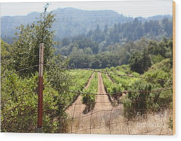 Sonoma Vineyards In The Sonoma California Wine Country 5d24521 Wood Print by Wingsdomain Art and Photography