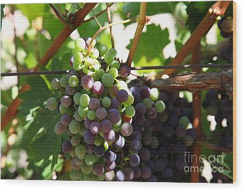 Sonoma Vineyards In The Sonoma California Wine Country 5d24578 Wood Print by Wingsdomain Art and Photography